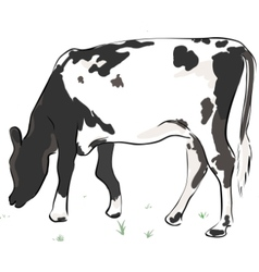 Cow in the field vector