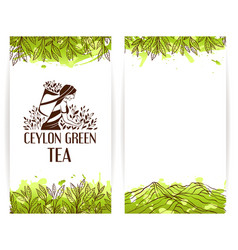 Green tea banner template vector image