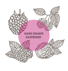 hand drawn raspberry fruits vector image vector image