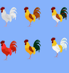 Rooster Cock set of bird different color vector image vector image