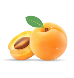 group of ripe sliced apricot with leaves isolated vector image vector image