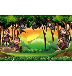 Monkeys climbing tree in the jungle vector