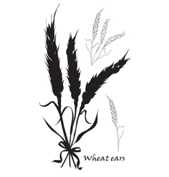 Ears of wheat tied black silhouette on white vector