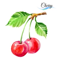 Cherry vector image