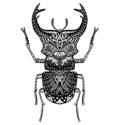 Hand drawn beetle vector
