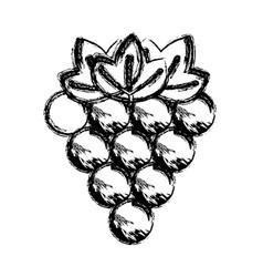 Contour grapes fruit icon image vector