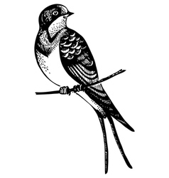 Swallow bird vector image