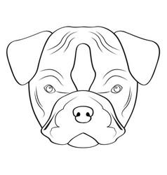 isolated pitbull avatar vector image