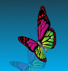 Beautiful colored butterfly with reflection the vector