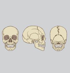 Human skull anatomy pack vector