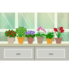 Houseplants Background vector image