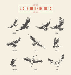 Silhouettes birds eagle owl drawn sketch vector