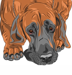 Sad dog great dane vector