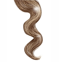 curl isolated on white vector image