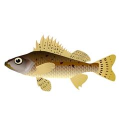 ruffian fish vector image vector image