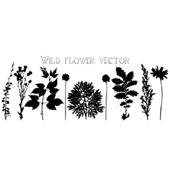 Silhouettes of wild flowers and leaves vector