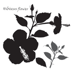 Hibiscus flower black silhouette on white vector