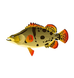 Chinese ruff fish vector image