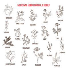 Best herbal remedies for colic relief vector