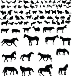 Animals collection vector