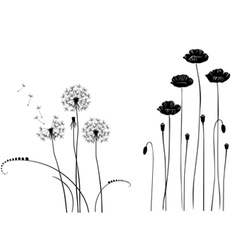 Collection wild plant poppy dandelion vector