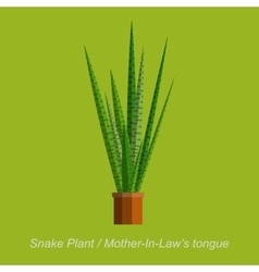Flat of indoor homeplant snake vector