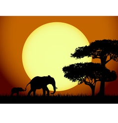 Elephants at sunset vector image