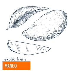 mango hand drawn vector image vector image