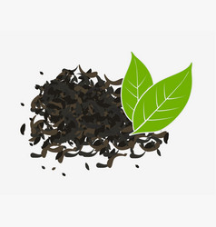 Tea dry and fresh green leaves isolated vector