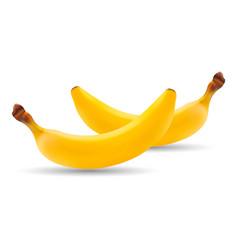 set of natural fresh banana healthy organic fruit vector image