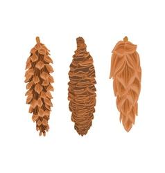 Three pine cones spruce cones christmas tree vector
