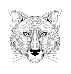 Fox head front drawing vector