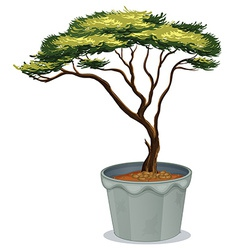 Bonsai vector