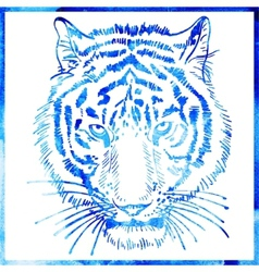 Head of tiger is in a watercolor artwork in a blue vector