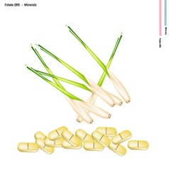 Fresh lemon grass with vitamin b9 and minerals vector