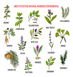 Best herbal remedies for dementia vector