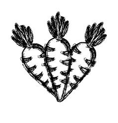 Contour carrots vegetable icon image vector