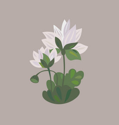 lotus flower icon water lily flower vector image vector image