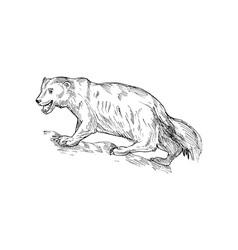 Nx wolverine sketch vector