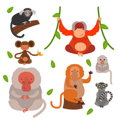 Different types of monkeys rare animal set vector