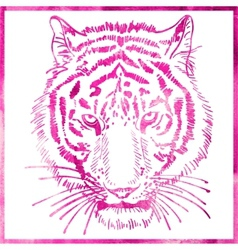 Head of tiger is in a watercolor artwork in pink vector