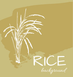 background rice2eps vector image vector image
