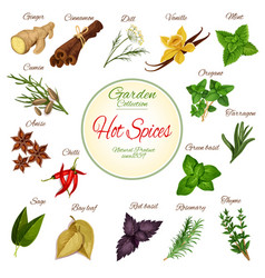 Hot spice herb and condiment poster design vector