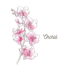 Pink orchid on white background vector