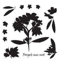 Set of bouquet beautiful forget-me-not flowers vector