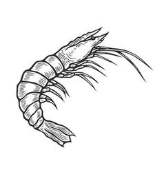 shrimp hand drawn vector image vector image