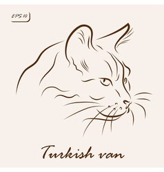 Turkish van cat vector