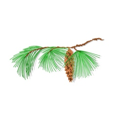 Branch pine eastern white pine christmas tree vector