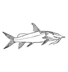 Upside down catfish vintage vector