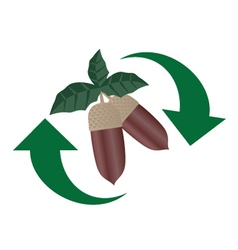 Recylce acorn food vector